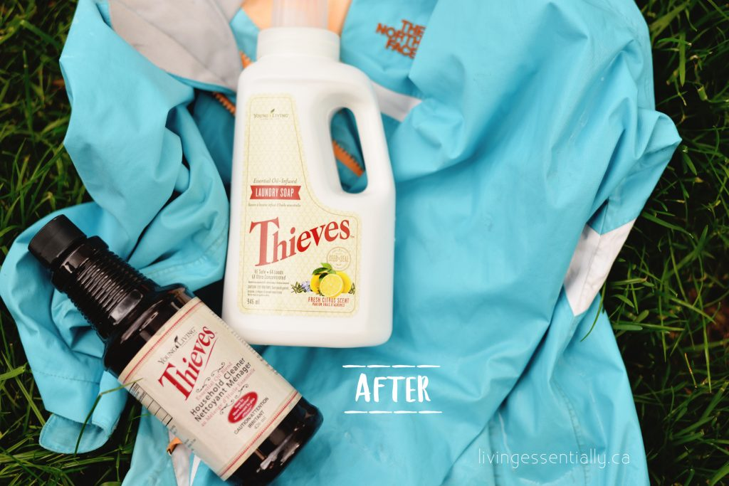 young living essential oils thieves cleaner